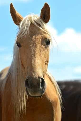 Fototapeta Konie Zwierzęta 10153 Wallmachine Pl