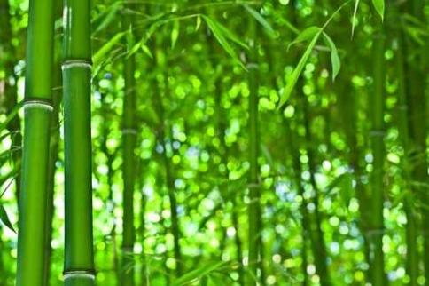 Fototapety NATURA bambusy 10398-big