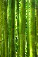 Fototapety NATURA bambusy 10399 mini
