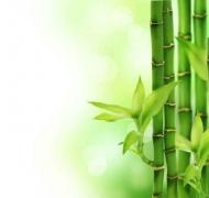 Fototapety NATURA bambusy 10400 mini