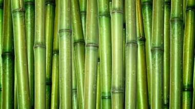 Fototapety NATURA bambusy 10402