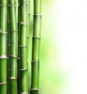 Fototapety NATURA bambusy 10403 mini