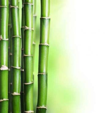 Fototapety NATURA bambusy 10403