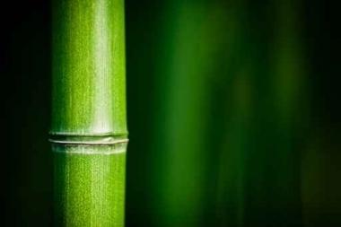 Fototapety NATURA bambusy 10405