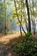 Fototapety NATURA drzewa 10407 mini