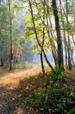 Fototapety NATURA drzewa 10407