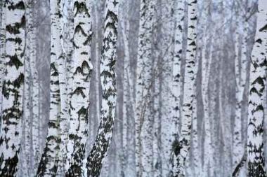 Fototapety NATURA drzewa 10409