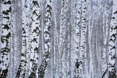Fototapety NATURA drzewa 10409-big