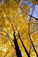 Fototapety NATURA drzewa 10411 mini
