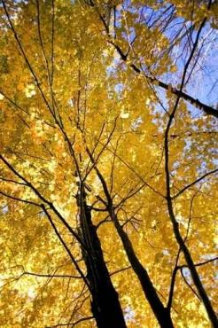 Fototapety NATURA drzewa 10411