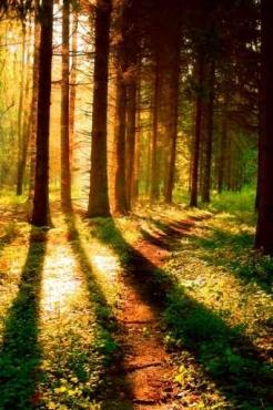 Fototapety NATURA drzewa 10412