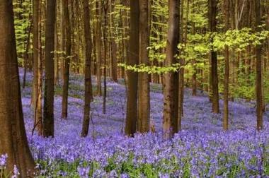 Fototapety NATURA drzewa 10413