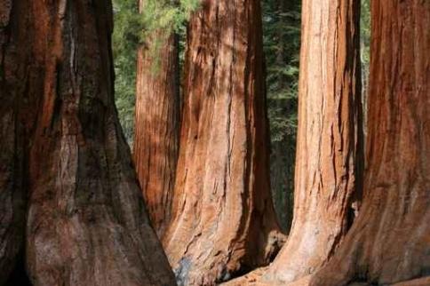 Fototapety NATURA drzewa 10414-big