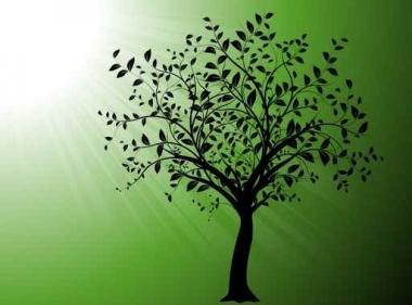 Fototapety NATURA drzewa 10416