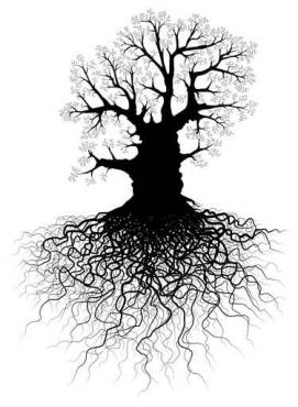 Fototapety NATURA drzewa 10417