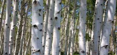Fototapety NATURA drzewa 10418