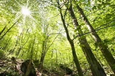 Fototapety NATURA drzewa 10419