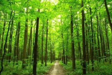 Fototapety NATURA drzewa 10420