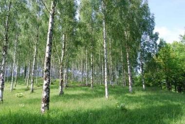 Fototapety NATURA drzewa 10421