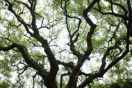 Fototapety NATURA drzewa 10423 mini