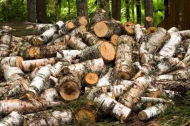 Fototapety NATURA drzewa 10424