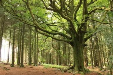 Fototapety NATURA drzewa 10425