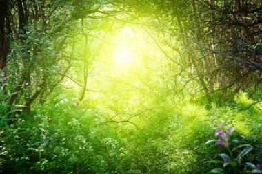 Fototapety NATURA drzewa 10426