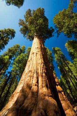 Fototapety NATURA drzewa 10428