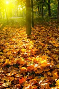 Fototapety NATURA drzewa 10429
