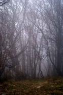 Fototapety NATURA drzewa 10431 mini