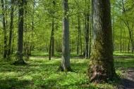Fototapety NATURA drzewa 10433 mini