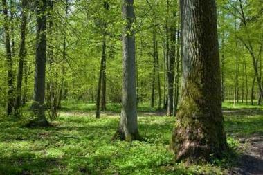 Fototapety NATURA drzewa 10433
