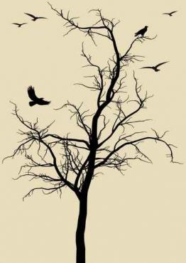 Fototapety NATURA drzewa 10434