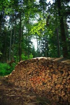 Fototapety NATURA drzewa 10436