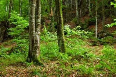 Fototapety NATURA drzewa 10437