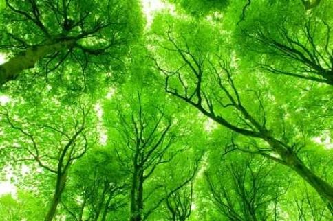 Fototapety NATURA drzewa 10441-big