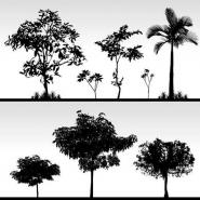 Fototapety NATURA drzewa 10443 mini