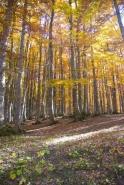 Fototapety NATURA drzewa 10444 mini