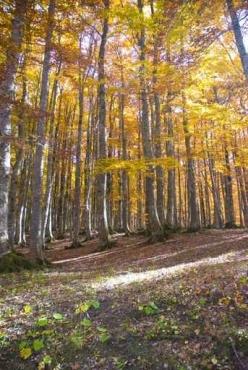 Fototapety NATURA drzewa 10444