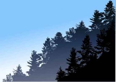 Fototapety NATURA drzewa 10445