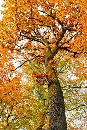 Fototapety NATURA drzewa 10446-big