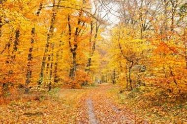 Fototapety NATURA drzewa 10447