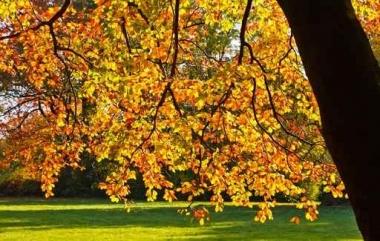 Fototapety NATURA drzewa 10448