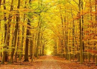 Fototapety NATURA drzewa 10449