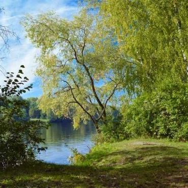 Fototapety NATURA drzewa 10450