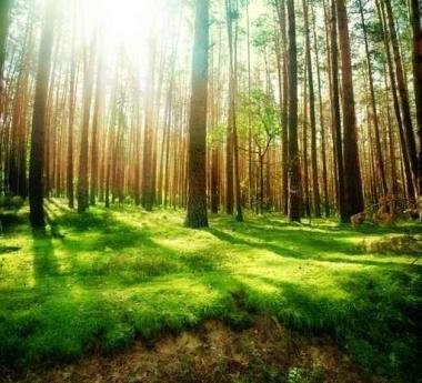 Fototapety NATURA drzewa 10451