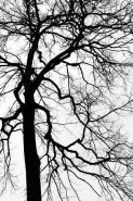 Fototapety NATURA drzewa 10453 mini