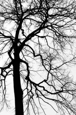 Fototapety NATURA drzewa 10453