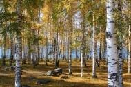 Fototapety NATURA drzewa 10454 mini