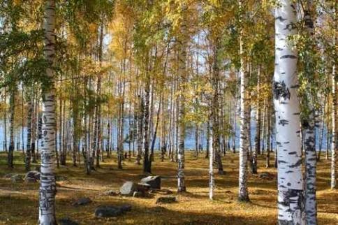 Fototapety NATURA drzewa 10454-big